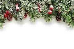 Bakgrund för julgranfilialer Arkivbild