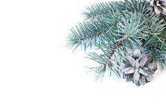 Bakgrund för julkort med en gran och kottar royaltyfri bild