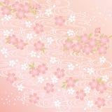 Bakgrund för körsbärsröd blomning Royaltyfri Foto