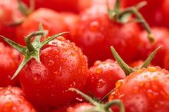Bakgrund för körsbärsröda tomater Fotografering för Bildbyråer