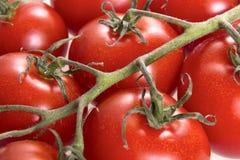 Bakgrund för körsbärsröda tomater Royaltyfri Foto