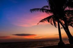 Bakgrund för kokospalmkontursolnedgång Royaltyfri Fotografi