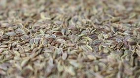 Bakgrund för korianderfrö stock video