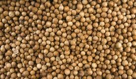Bakgrund för korianderfrö Naturlig krydda textur royaltyfri foto