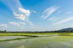 Bakgrund för landskap för blå himmel för grönt gräs för risfält molnig Arkivbild