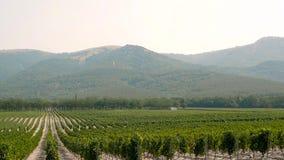 Bakgrund för landskap för druvaWineland bygd av kullar med bergbakgrunden stock video