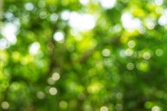 Bakgrund för ljus för Abstact defocusbokeh som göras av skogstil Royaltyfri Fotografi