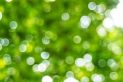 Bakgrund för ljus för Abstact defocusbokeh som göras av skogstil Royaltyfri Bild