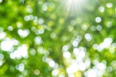 Bakgrund för ljus för Abstact defocusbokeh som göras av skogstil Arkivfoton