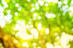 Bakgrund för ljus för Abstact defocusbokeh som göras av skogstil Fotografering för Bildbyråer