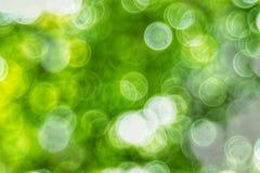 Bakgrund för ljus för Abstact defocusbokeh som göras av skogstil Royaltyfria Bilder
