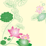 Bakgrund för Lotus blomma Arkivfoto