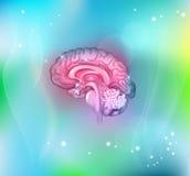 Bakgrund för mänsklig hjärna Royaltyfri Foto
