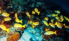 Bakgrund för marin- liv Royaltyfria Foton