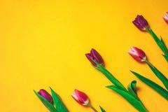 Bakgrund för marsch för dagen för kvinna` s 8 med våren blommar Royaltyfri Fotografi