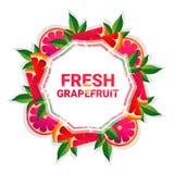 Bakgrund för modell för färgrikt för cirkel för grapefruktfrukt utrymme för kopia organisk over vit royaltyfri illustrationer