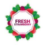 Bakgrund för modell för färgrikt för cirkel för jordgubbefrukt utrymme för kopia organisk over vit royaltyfri illustrationer