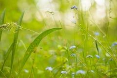 Bakgrund för natur för abstrakta växter för sommar blom- grön Royaltyfri Bild