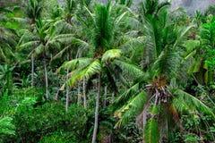 Bakgrund för natur för gräsplan för skog för kokosnötpalmträddjungel Royaltyfri Bild