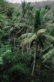 Bakgrund för natur för gräsplan för skog för kokosnötpalmträddjungel Royaltyfri Foto