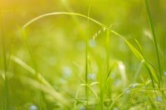 Bakgrund för natur för grönt gräs för abstrakt sommar för makro blom- Royaltyfri Fotografi