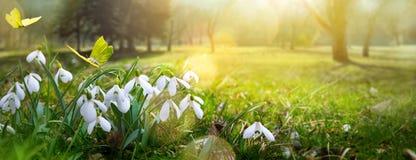 Bakgrund för påskvårblomma; ny blomma och fjäril