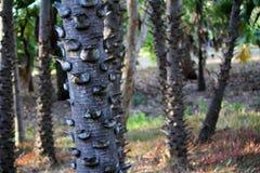 Bakgrund för palmträdstam Fotografering för Bildbyråer