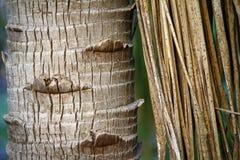 Bakgrund för palmträdstam Arkivbilder
