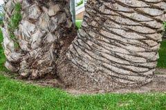 Bakgrund för palmträdstam royaltyfria foton
