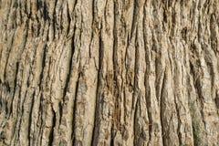 Bakgrund för palmträdstam Arkivfoton