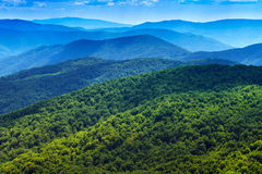 Bakgrund för panorama för Carpathians skogberg Royaltyfri Foto