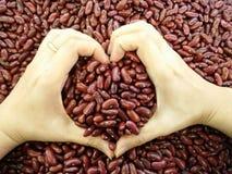 Bakgrund för röda bönor med händer som ser hjärtor arkivbilder