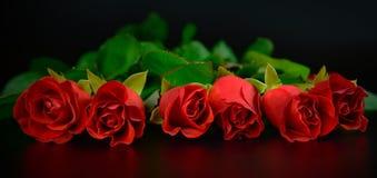 Bakgrund för röda rosor för dag för moder` s Royaltyfria Foton