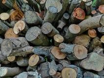 Bakgrund för samkopiering för trädfilial abstrakt arkivbilder