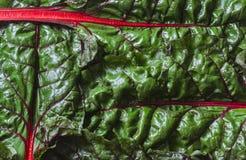 Bakgrund för schweizisk chard för friskhet, närbild Grönsakmatbakgrund, bästa sikt, fritt utrymme Arkivfoto