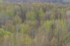 Bakgrund för skogträd Royaltyfria Bilder