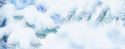 Bakgrund för snö för ferie för vintergranträd Blå gran, snöflingor Härlig jul eller suddig bakgrund för nytt år fotografering för bildbyråer