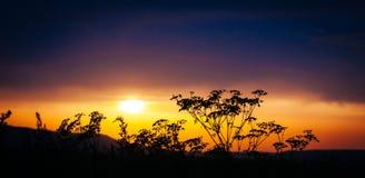 Bakgrund för solnedgång för brand för gräskonturvördnad orange Royaltyfria Foton