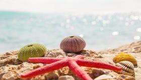 Bakgrund för sommar för sjöstjärnasnäckskalstrand Royaltyfria Foton