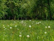 Bakgrund för sommarlandskapgräsplan Royaltyfria Bilder