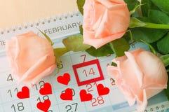 Bakgrund för St-valentindag - rosor av den ljusa persikan färgar över kalendern med det röda inramade datumet för St-valentindage Royaltyfri Bild