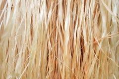 Bakgrund för sugrör för kjol för Stillahavs- öar för bast fotografering för bildbyråer
