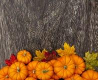 Bakgrund för tacksägelse för höstpumpa Arkivfoton