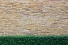 Bakgrund för tegelstenvägg med gräsplan Arkivbilder