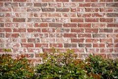 Bakgrund för tegelstenvägg med längst ner buskar royaltyfri bild