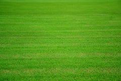 Bakgrund för textur för fält för grönt gräs Arkivbild
