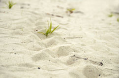 Bakgrund för textur för sand för spår för havssköldpadda vit kornig krusig Royaltyfria Foton
