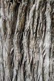Bakgrund för textur för trädskäll arkivfoton