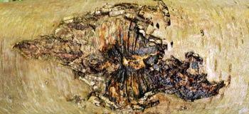 Bakgrund för textur för trädskäll arkivbilder