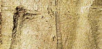 Bakgrund för textur för trädskäll royaltyfri bild